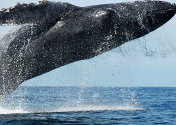 Cada 23 de julio se celebra el Día Mundial de Ballenas y Delfines. Foto: Andina.