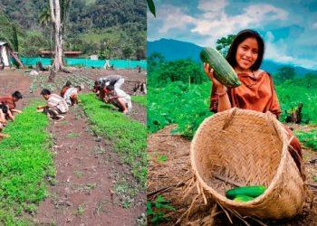 Proyecto beneficiará a ocho comunidades asháninkas en Pichari. Foto: Jornada.