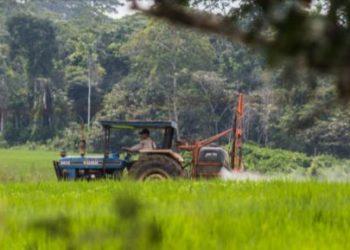 La colonia menonita es investigada por deforestar cerca de 2500 hectáreas de bosque primario. Foto: Sebastián Castañeda.